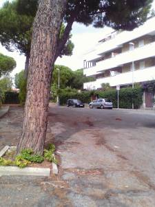 la strada dissestata dai pini