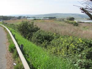 Foto dell'area dove sorgeranno i pip.