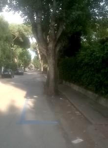 Alberi e strisce blu a Santa Severa