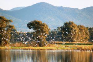 Una foto della riserva di Macchiatonda.