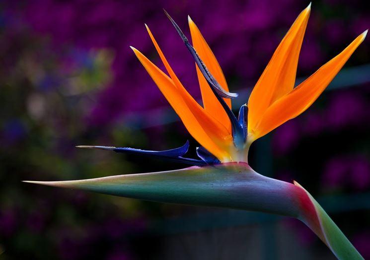 Commercio Santa Marinella. Minghella: i fiori dell'Etruria Meridionale. Soddisfatta Valentina Fantozzi